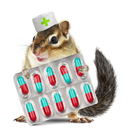 ardilla: Ardilla mascota retenci�n pastillas divertidos, sombrero veterinario vestido