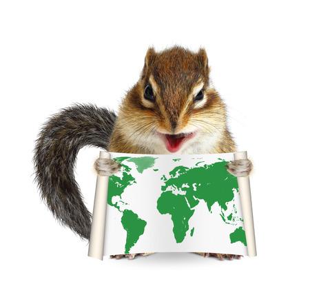 funny animal: Funny animal chipmunk holding map on white background