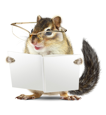 Funny animal chipmunk with glasses reading book jn white background