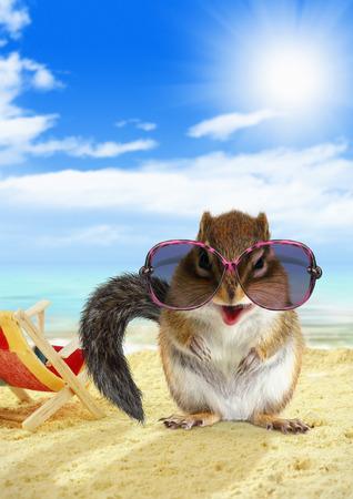 funny animal: Funny animal chipmunk on sandy beach
