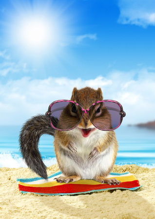 comedic: Funny animal on summer holiday, squirrel on the beach with sunglasses