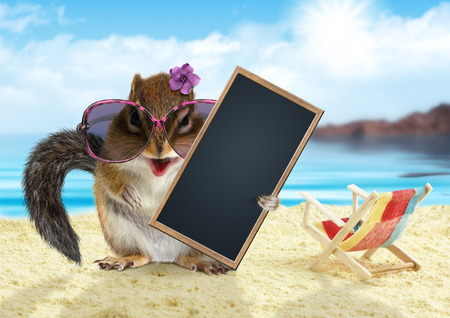 funny animal: Funny animal on summer holiday, squirrel on the beach with sunglasses
