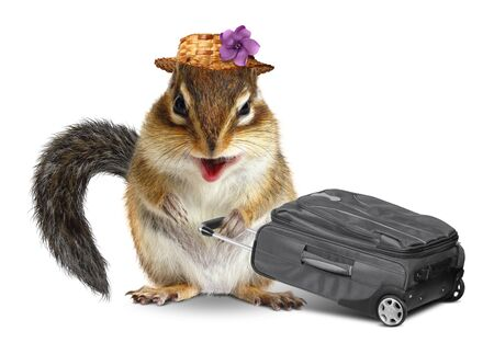 vacationer: Funny traveler, animal chipmunk with suitcase isolated on white Stock Photo