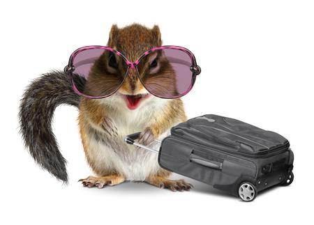 ardilla: turismo divertido, ardilla animal con el equipaje en el fondo blanco