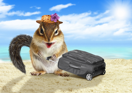 vacationer: Funny vacationist, animal squirrel with suitcase at beach Stock Photo