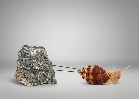 Caracol tirando piedra grande, el concepto de persistencia Foto de archivo