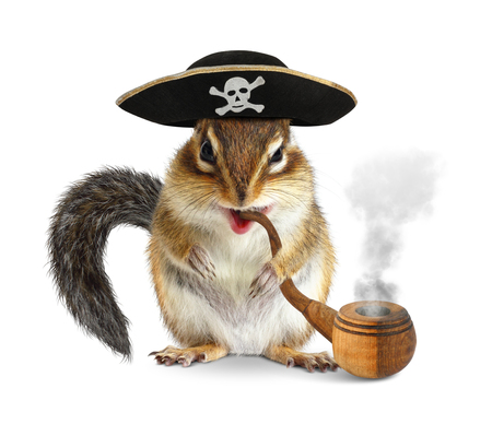 desperado: Funny animal pirate, chipmunk with pipe and filibuster hat on white