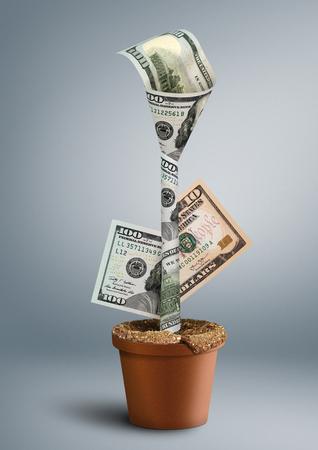 성장 재산 창조적 인 개념, 냄비에 꽃으로 돈
