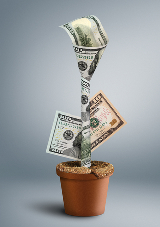 creative money: growing wealth creative concept, money as flower in pot