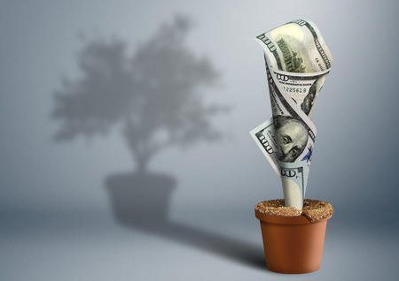 creative money: finance creative concept, money as tree in pot