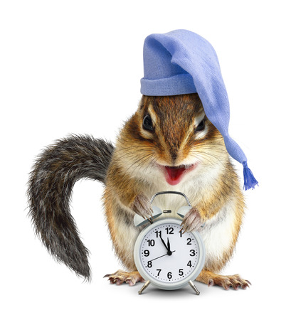 overslept: laughable animal chipmunk with clock and sleeping cap