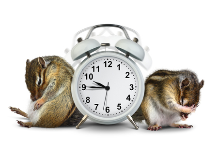 overslept: Funny animals chipmunks wakeup with ringing clock on white background