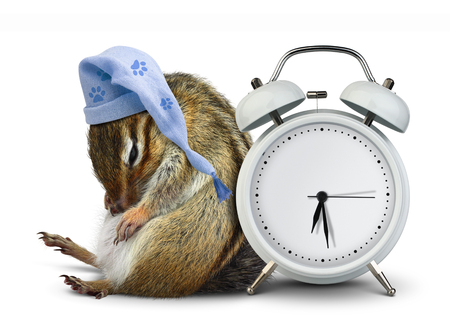 overslept: Funny animal chipmunk sleep with clock and sleeping hat Stock Photo