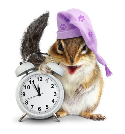 overslept: bedtime concept, Funny animal chipmunk with clock and sleeping cap