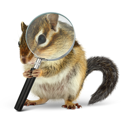 Funny pet chipmunk searching with  loupe, on white Stock Photo