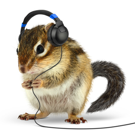 Funny animal chipmunk listening music with earphones, on white