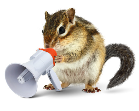 loudspeaker: Funny animal chipmunk talking into megaphone, isolated on white