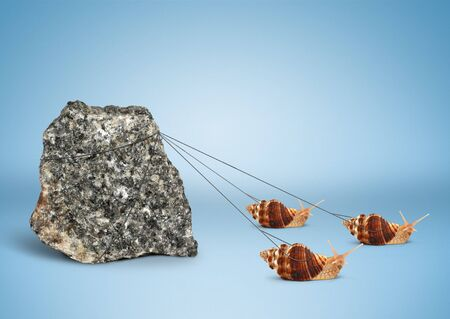 Team work concept, snails pulling big rock