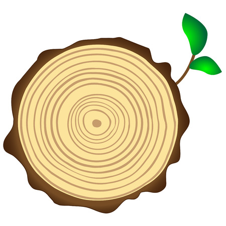 life ring: Cross section of tree trunk showing growth rings