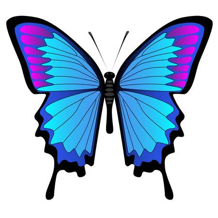 Blauer Schmetterling, isoliert auf weiss