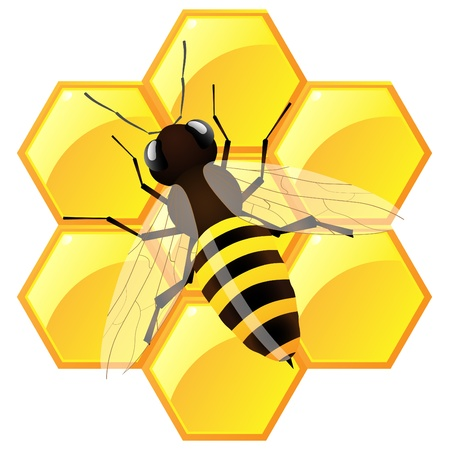 stinging: Bee with honeycombs