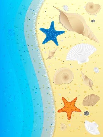 Shells and starfishes on sand background. Vector illustration. Stock Vector - 11963338
