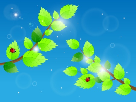 Background with green leaves and ladybird  illustration  Vector