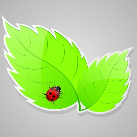 Green leaves with ladybird  illustration  Vector