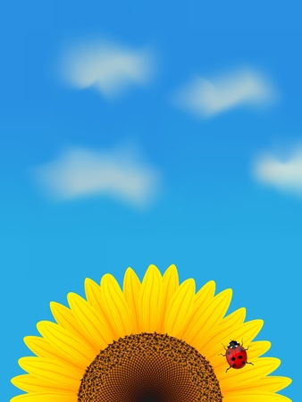 Sunflower and ladybird on blue sky