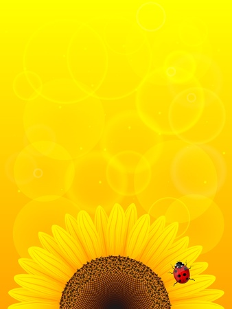Sunflower and ladybird on yellow background  Illustration