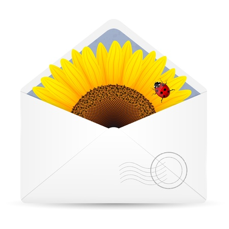 envelop: Open envelop with sunflower and ladybird