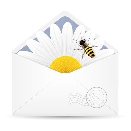 Open envelope with chamomile flower and bee