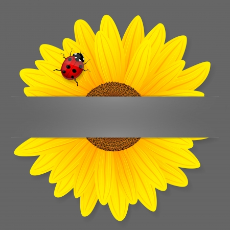 Sunflower and ladybird on grey background