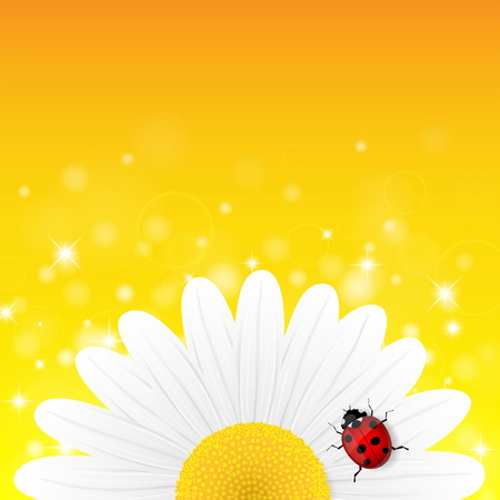 chamomile flower: Chamomile flower and ladybird on yellow background. Vector illustration.