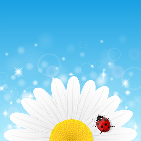 chamomile flower: Chamomile flower and ladybird on blue background. Vector illustration.
