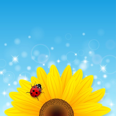 ladybird: Sunflower and ladybird on blue background. Vector illustration.