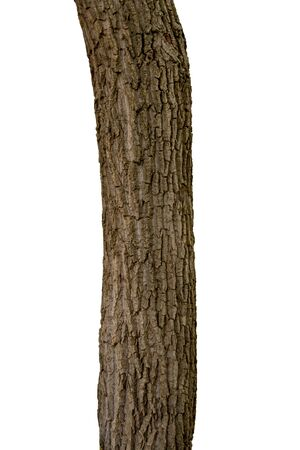 Isolated tree trunk on a white background