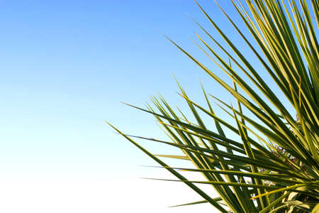 Palm leaves and beautiful blue sky. photo
