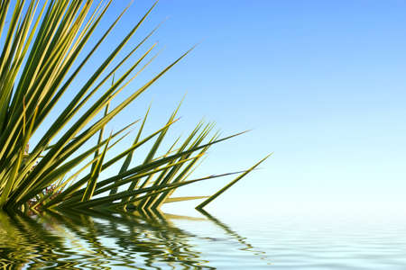 Palm leaves reflected in water and beautiful blue sky. photo