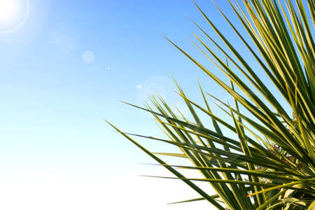 Palm leaves and beautiful blue sky. With lens flare. photo