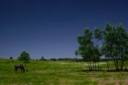 several trees in the field against the sky with a grazing horse, background