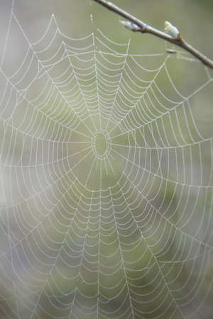 Web in dew photo