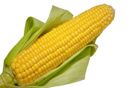 Open cob of fresh ripe corn on a white background Stock Photo