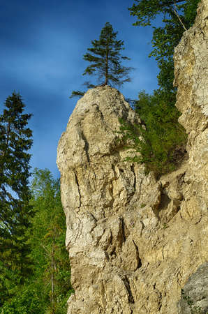Landscape with a rock of unusual shape in the form of a penis and spruce on it. Stock Photo