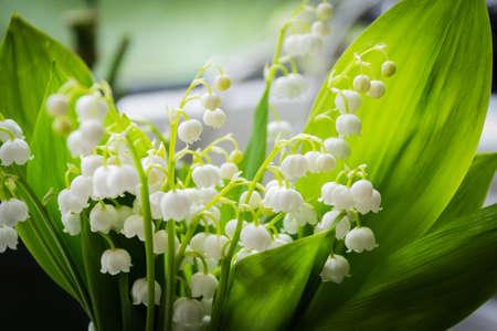 Zamknij się z lilii w dolinie w duży bukiet Zdjęcie Seryjne