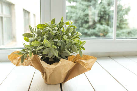 An artificial flower in a pot decorated with brown paper on a light window sill. Flower for office concept. Decor.