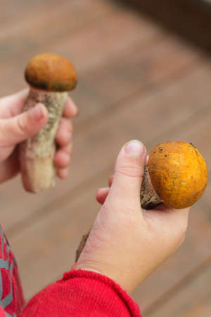 Edible mushrooms are the boletus in the boys hand. Mushroom time. Entertainment.