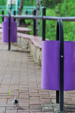 Violet, iron street urns on the background of a stone pavement. Ecology and cleanliness. Design. Banco de Imagens