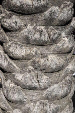 Palm tree trunk close up old natural background Banco de Imagens