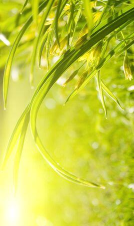 Garden grass, sunny morning Stock Photo - 5156328